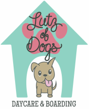 Lutz of Dogs